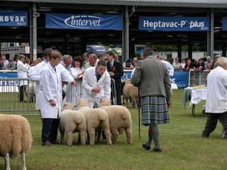 Royal Welsh Interbreed group the final cut [2004]