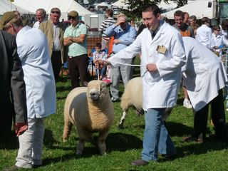 Ruslin Kilroy competing in the interbreed competition at Kington Show [2009]
